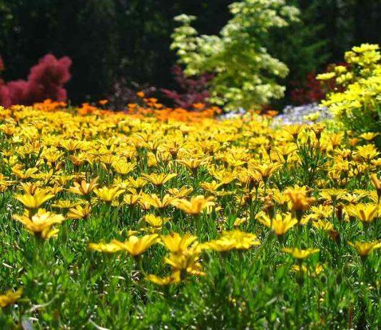 Gardening_tips