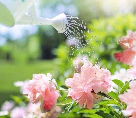 Gardening_watering