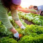 Fall_Gardening_Tips