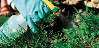 Gardening_weeding