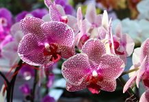 Best Tips To Grow Orchids - cutegardening.com