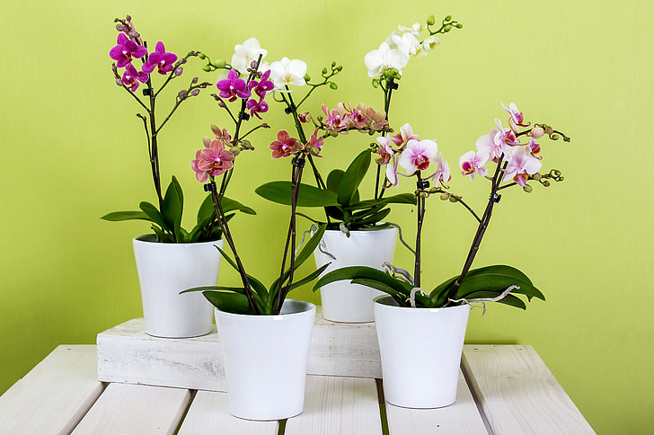 Best Tips To Grow Orchids - cutegradening.com